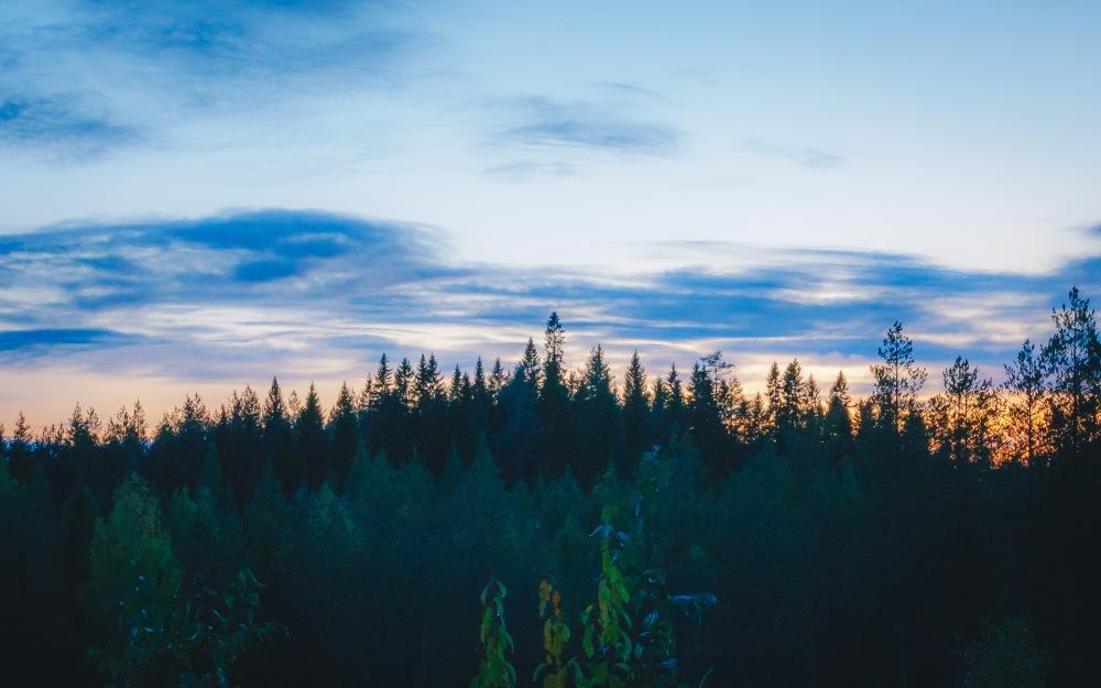 Joiku Erältä ja Elämästä suomenpystykorva metsästyskoira-2955.jpg